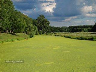 Зелёное-зелёное болото.